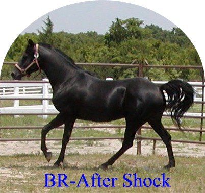 BR-After Shock