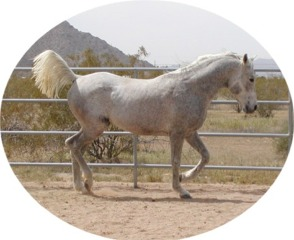 Son of Misty Ferzon x Mistana of Charab